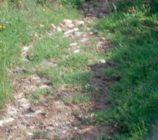Albuñol 066 CAMINO DE LA FUENTE DE LOS MORENOS