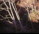 Alpujarra de la Sierra 037 PUENTE VIEJO DE MECINA