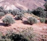 Alpujarra de la Sierra 045 ERMITA DE MONTENEGRO