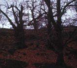 Alpujarra de la Sierra 052 CASTAÑOS DE MECINA BOMBARON